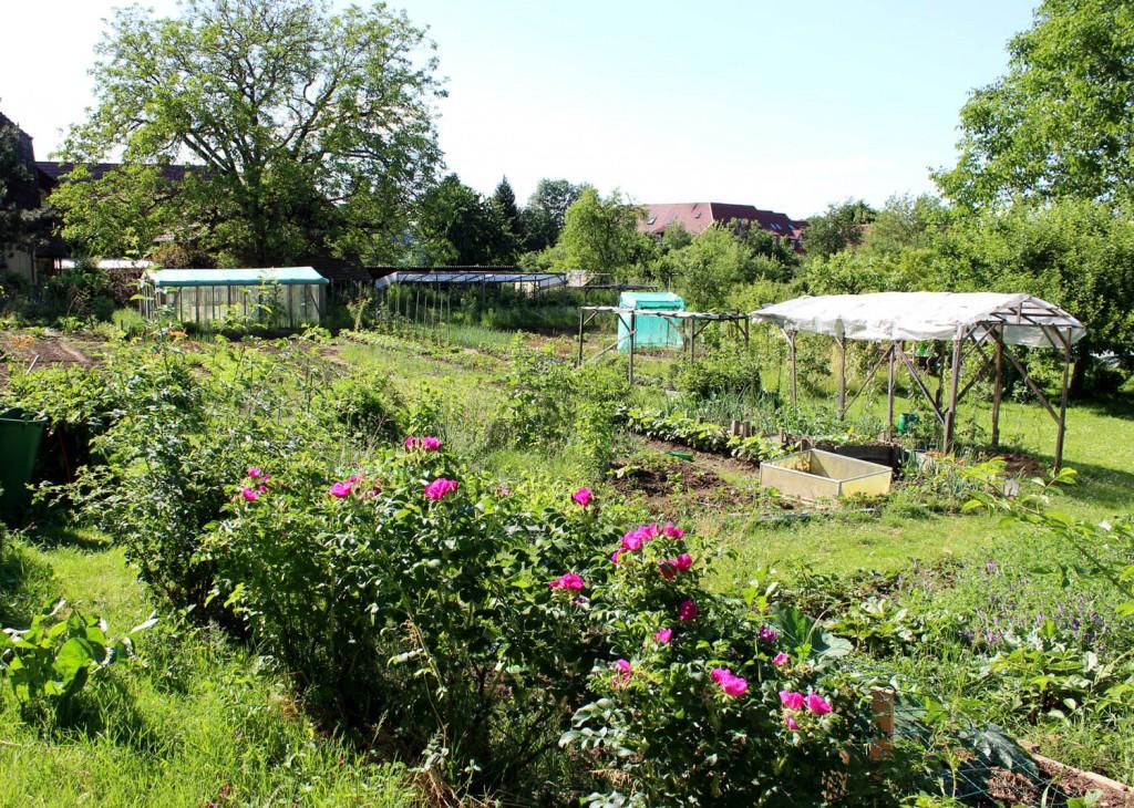 Ein grünes Gartenparadies, das die sogen.