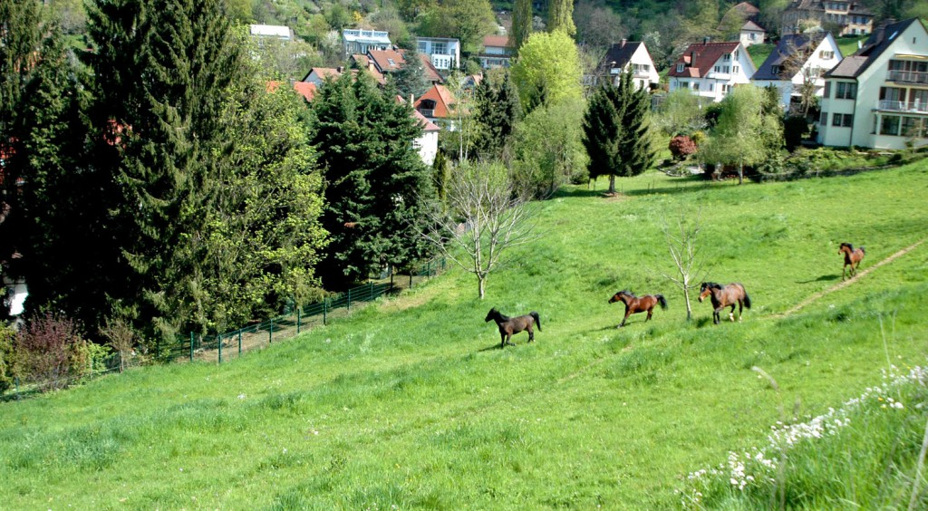 Pferdewiesen_3