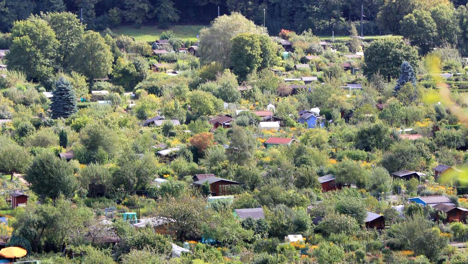 Kleingärten sind als grüne Oasen für die Stadt unverzichtbar!