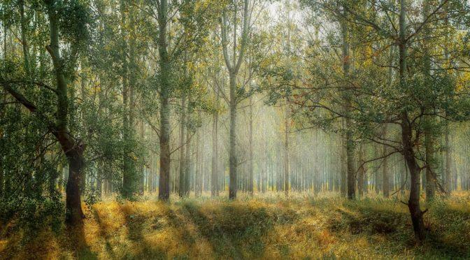 Möglichkeit zum Erhalt der bestehenden Bäume
