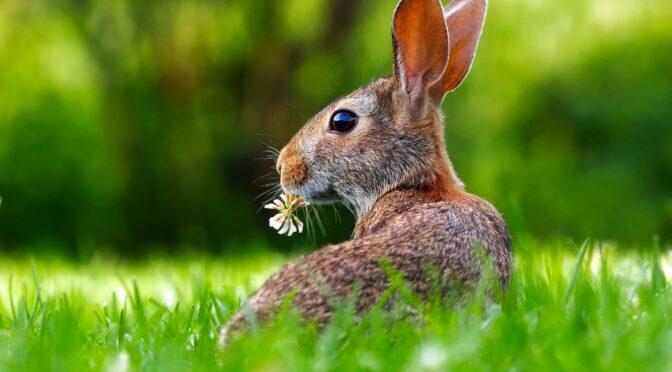 Wir wünschen gesunde und frohe Ostern